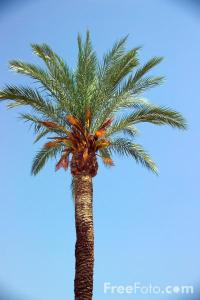 1501_11_58-palm-tree_web1