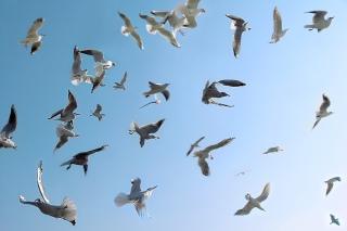 seagulls-639x426